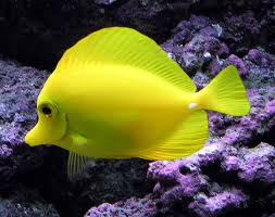 Mitt Akvarium.