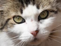 Dr. Singhs cat